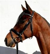 Hest til salg - NEERGAARD'S TARCO