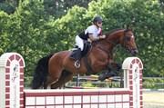 Hest til salg - CARNEVAL DE PA- RIS KORSVÆNGET