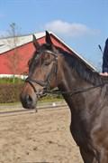 Hest til salg - RAMASJANG ROYAL