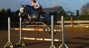 Hest til salg - Corsica Cayenne