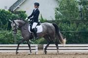 Hest til salg - SHARPAY A