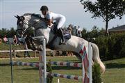 Hest til salg - ROSITA