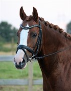 Hest til salg - LAILA