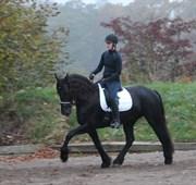 Hest til salg - HILDE FAN MEREN-STATE