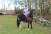Hest til salg - KLOSTERVANG RONALDO