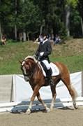Hest til salg - FROUKJE VAN DE OOSTERWEG