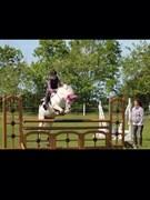 Hest til salg - Miss Mary