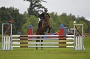 Hest til salg - Bøgelys Latina