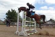 Hest til salg - HEIDI