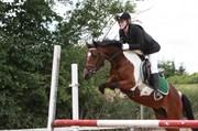 Hest til salg - FISKERGAARDENS AMEYSING