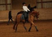 Hest til salg - MAGIC FANCY FANCY