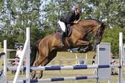 Hest til salg - STENHØJS ORION