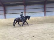 Hest til salg - Alina