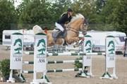 Hest til salg - IM TOO COOL SPARTACUS