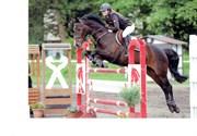 Hest til salg - Valentino