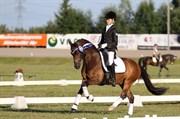 Hest til salg - V.K.Nestor