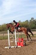 Hest til salg - ARMARILLO