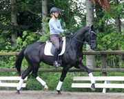 Hest til salg - HOT SPOT