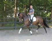 Hest til salg - RUBICON