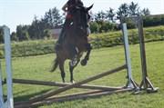 Hest til salg - BAKKEGAARDENS ANASTASIA