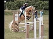 Hest til salg - Mille Skov