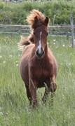 Hest til salg - QVISTORF DONNA OLYMPIA