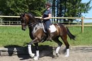 Hest til salg - OKSLUNDS HOT STARLINE
