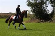 Hest til salg - LET´S DANCE DELICIOUS