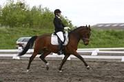 Hest til salg - ALONSO