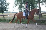 Hest til salg - Fellini