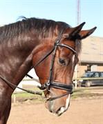 Hest til salg - DOMINGO