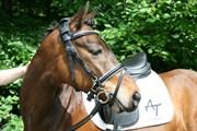 Hest til salg - FESTINA'S SATANTA