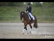 Hest til salg - ZA-ZAR