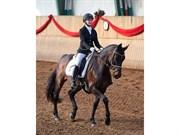Hest til salg - HANKY PANKY FIRFOD