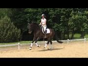 Hest til salg - FOO FIGHTER