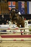 Hest til salg - PRIS CIMAROSA