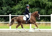 Hest til salg - Lattjo Lajban