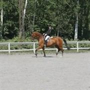 Hest til salg - N.O.H.'S D'ARTAGNAN