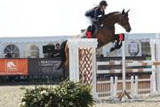Hest til salg - VICTORIA