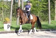 Hest til salg - BORDEAUX