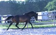 Hest til salg - TEASER