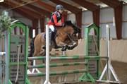 Hest til salg - RUGHAVEN CHIVAS