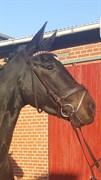Hest til salg - STENHOLT EDGAR
