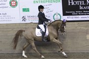 Hest til salg - NØRLUNDS SAVANNAH