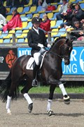 Hest til salg - SANDDALLUNDS STARFIGHTER