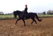 Hest til salg - SILJA