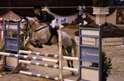 Hest til salg - STARDUST
