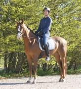 Hest til salg - KLITTENS KARISMA