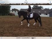 Hest til salg - Castiel