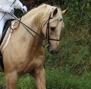 Hest til salg - BELL GALLIANO